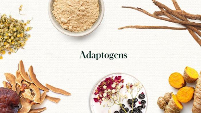 Adaptogen - Thảo dược giải tỏa căng thẳng